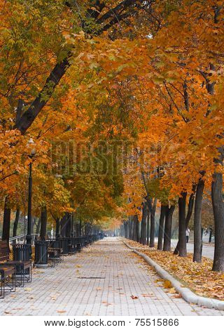 Park alley in red autumn