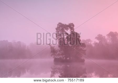 Tree Island On Lake In Sunrise Fog