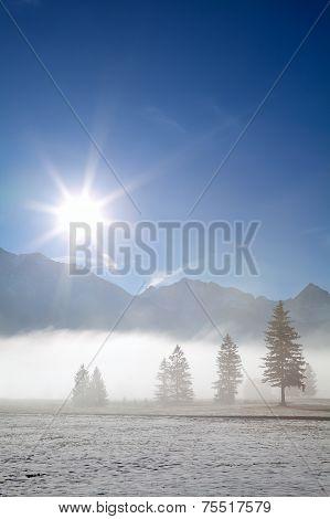 Foggy Alpine Meadow In Morning Sunshine