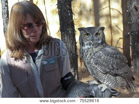 A Great Horned Owl At Bearizona, Williams, Arizona