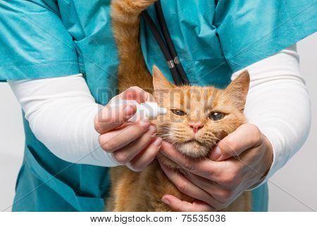 Animal Clinic - Cat Becomes Drops For Eyes