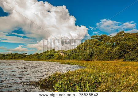 Amazing Pantanal landscape. Pantanal is one of the world's largest tropical wetland areas located in Brazil , South America