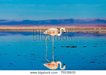 Atacama Salar in Chile with Flamingo