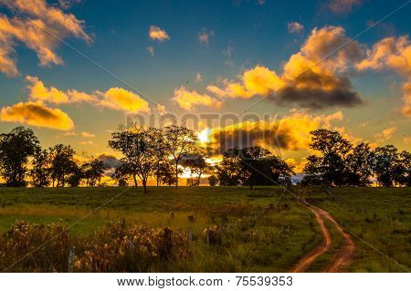 Pantantal Landscape