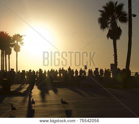Venice Beach Skate Park Sunset
