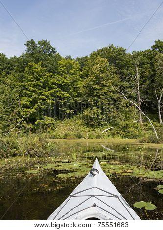 Kayak In The Wetlands
