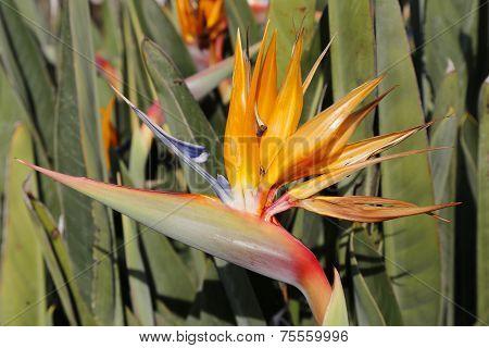 Tropical Parakeet flower