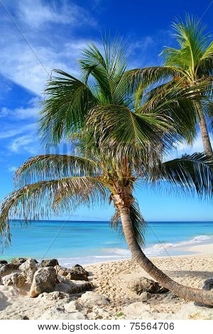 Palmtrees at Beach