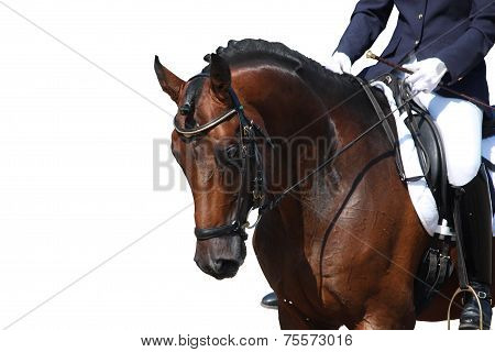Bay Horse Portrait Isolated On White