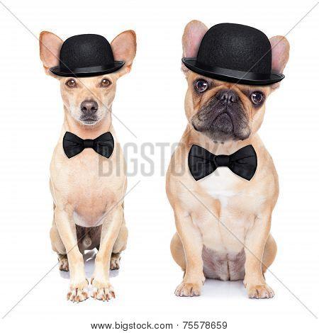 Funny Retro Dogs