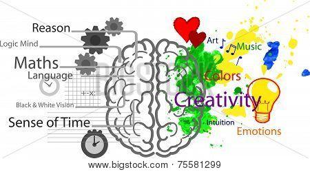 Brain hemispheres vector