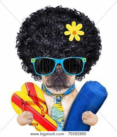 Cool Beach Dog