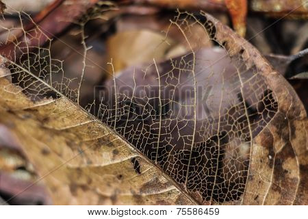 clear veins on fallen leaf