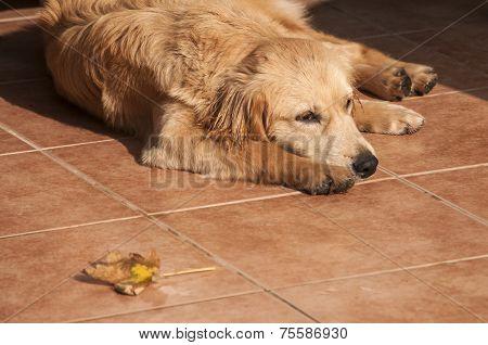 Dog on fall sun lit porch floor