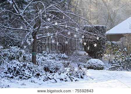 Tree With Shining Stars In Snowy Garden