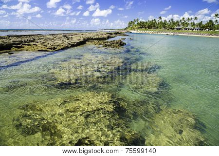 The Barrier Reef in Porto de Galinhas, Brazil