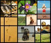 stock photo of sand lilies  - Set of different photos of Sri Lanka - JPG