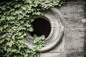 pic of mortuary  - Gothic window on the cemetery with ivyberry - JPG