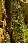 pic of winnebago  - Close up of a moss - JPG