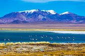 picture of desert animal  - Atacama Desert in Chile - JPG
