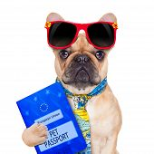 stock photo of citizenship  - fawn bulldog with passport immigrating or ready for a vacation isolated on white background - JPG