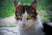 stock photo of wander  - portrait of a wandering cat with beautiful eyes who lives on the street  - JPG