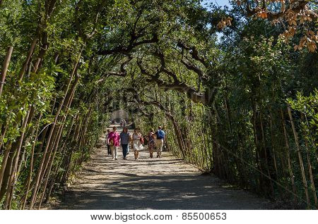 Tourists Walk In The Park Alley, Boboli Gardens, Florence.