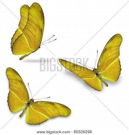 Three Yellow Butterfly