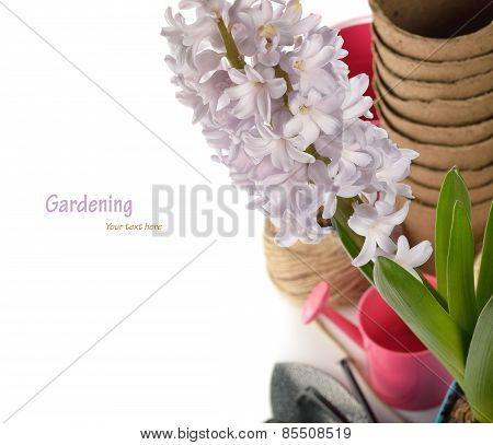 Garden Tools And Hyacinth