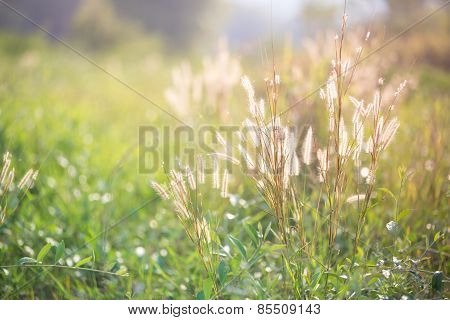 Flower Of The Grass Background
