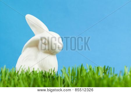China rabbit is in the thick green grass, isolated on blue