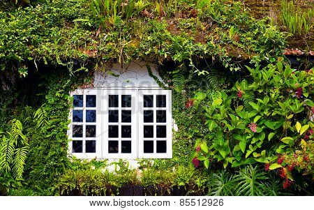 Old House Overgrown With Beautiful Plants And Flowers. Cameron Highlands, Malaysia