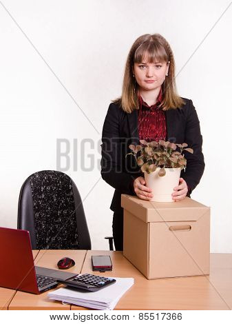 Girl In Office About Desktop Keeps Indoor Potted Plant