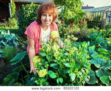 Woman in the garden cares for flowers. Female with dahlias