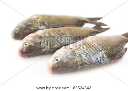 Raw peeled carp on white