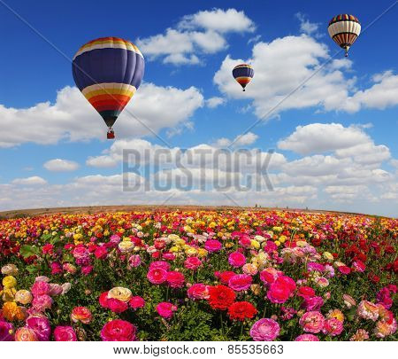The colorful buttercups. Spring windy day on the farm. In the sky flying scenic balloons