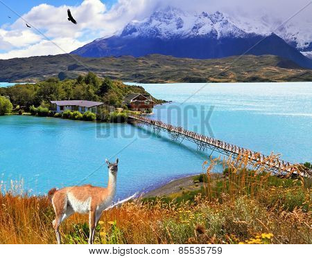 Dreamland Patagonia. In the center of the lake Pehoe - small island with hotel. Island and beach  connect easily bridge. On the hill there is  lovely guanaco.