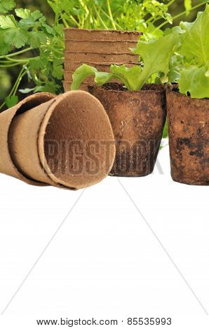 Biodegradable Pots