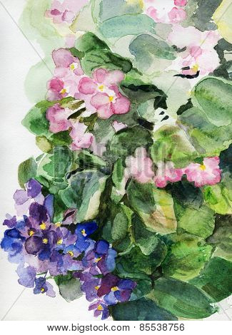 Watercolor painting of violets flowers