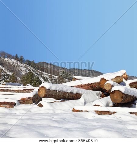 Timber stacks in snow with forest in background