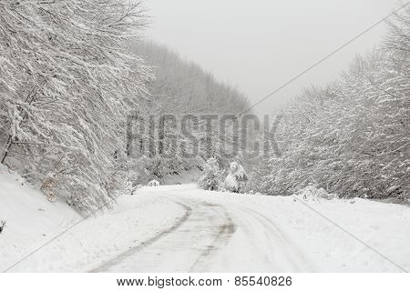 Icy road with snowy trees on sides of it