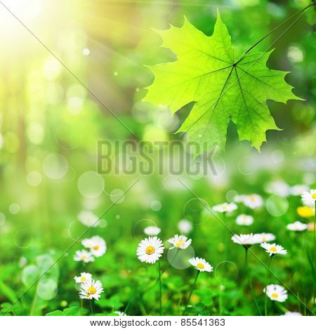 summer flower field  on the sky and forest. nature abstract