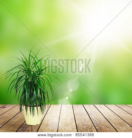 wood textured backgrounds in a room interior on the field backgrounds