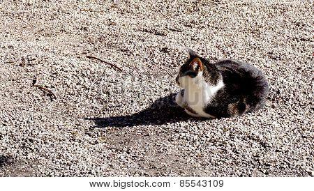 Hallstatt Cat