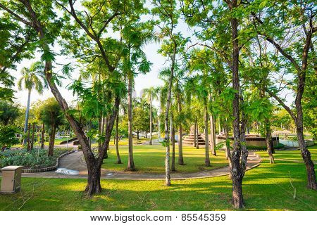 Green City Park In Evening