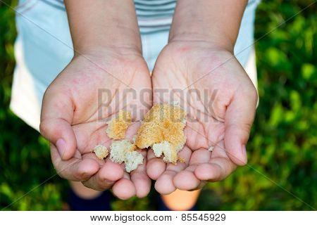 Breadcrumbs In Child's Hands