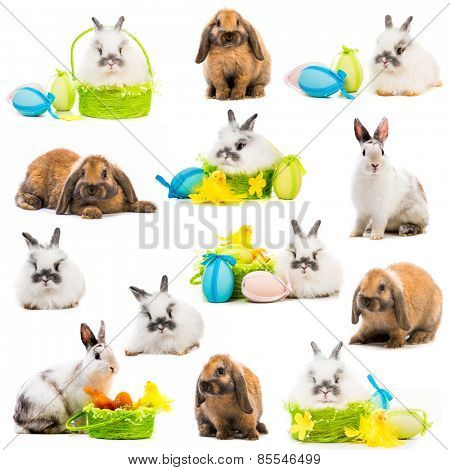 photo collage rabbits Easter eggs in a basket on a white background