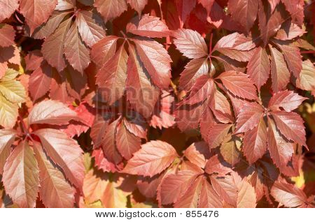 autunm leaves