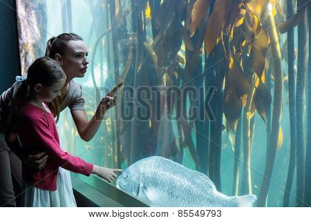 Happy mother and daughter looking at tank at the aquarium