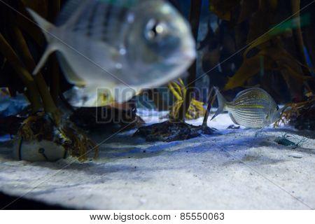 Fish swimming in a tank at the aquarium